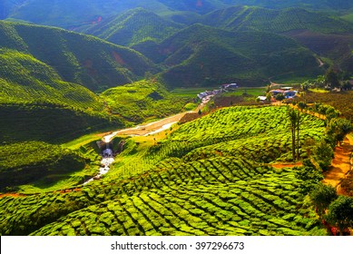 Highlight and shadow at tea field, Cameron Highlands with Haze and smoke effect at the mountain, Malaysia