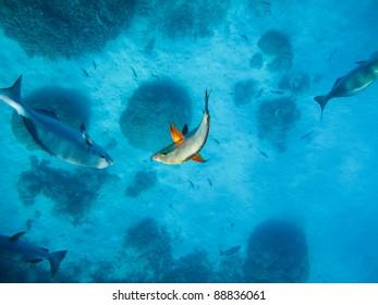 Highlighted fish underwater