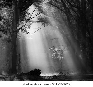 A highlighted tree in sun rays