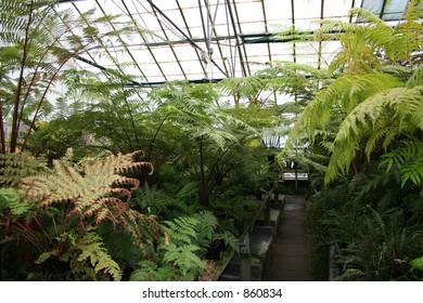 Highly textures Vibrant Green leaves.  Ferns in the Botanical Gardens - Edinburgh