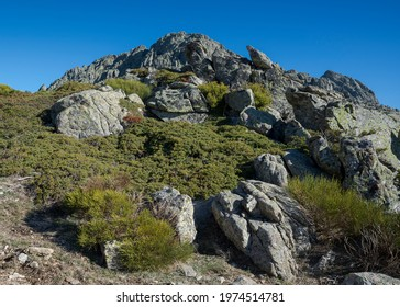 High-mountain scrublands in Guadarrama Mountains National Park, province of Madrid, Spain