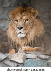 high-res picture of lion with an artistic background