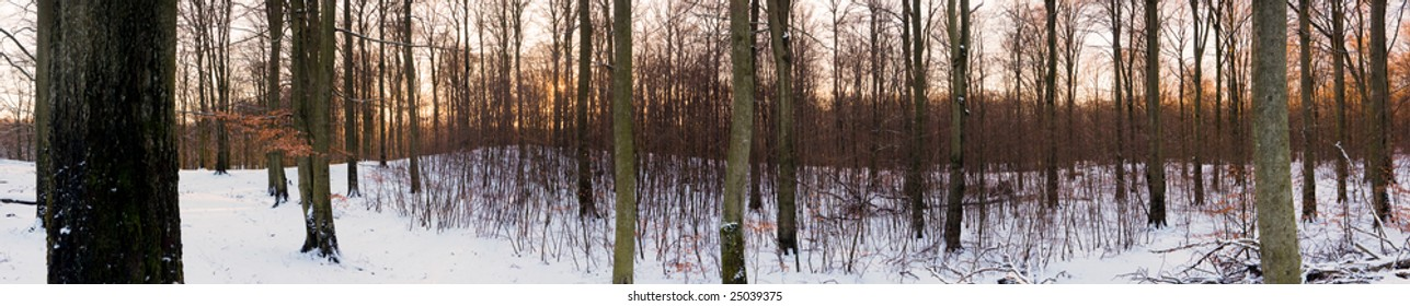 High-resolution panoramic view of a forest in winter