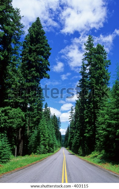 Highway 46 in the Mount Hood National Forest, Oregon, USA