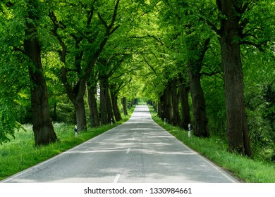 Highway in early summer with trees in fresh green foliage