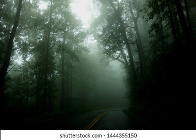 Highway Scene with Heavy Fog and Silhouettes of Trees
