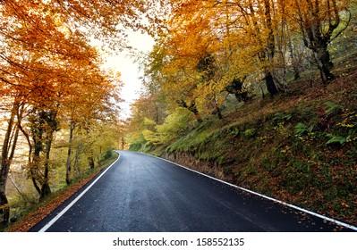Highway scenery of beech in autumn