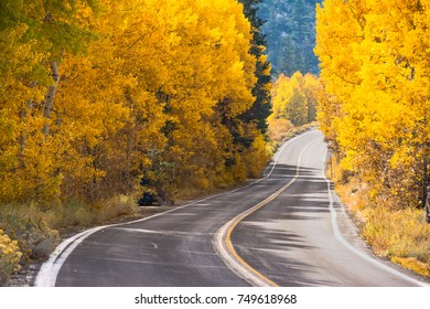 Highway thru the Aspen, June Lake, California