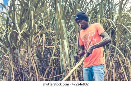 HIGUEY, DOMINICAN REPUBLIC - NOVEMBER 19, 2014: portrait of haitian man working on sugar cane plantation in Dominican Republic