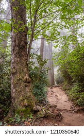 Hike to Grotto Falls on the Trillium Gap Trail at Great Smoky Mountains National Park