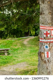 Hike marks painted on tree. Hiking signs. Hiking marks. Wooden table and bencj seen on the left. Red cross and on white square- hike path symbol. Hikingl route sign.