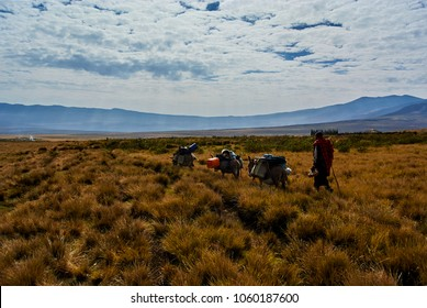 Hike in Ngorongoro Conservation Area Nationnal park Highlands craters en route Bulati Village from Nainokanoka with Masai Guide and cook. The Crater Highlands (Ngorongoro Highlands) are a region al