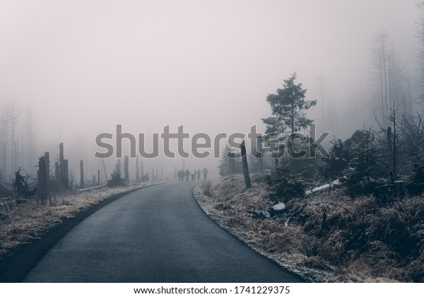 Hike on the foggy road through the forest