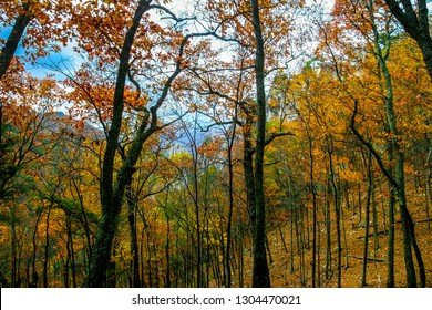 A hike on the Seneca Rocks Trail in Autumn treats one to a forest ablaze in color, plus a view of the Seneca Rocks through the trees. This area is located in Monongahela National Forest  West Virginia