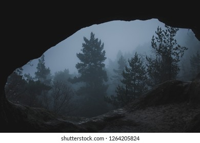 Hike through a foggy and mystical landscape in the Harz mountains