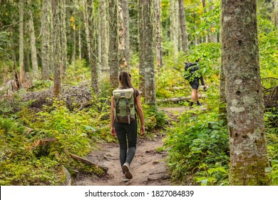 Hike trail hiker woman walking in autumn fall nature woods during fall season. Hiking active people tourists wearing backpacks outdoors trekking in pine forest. - Shutterstock ID 1827084839