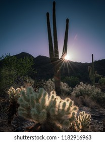 Hiked up the gateway trail to capture this sunburst sunrise shot through the sonoran cactus