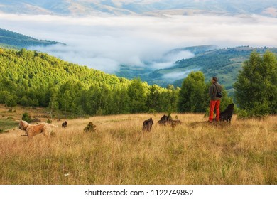 Hiker admiring the view with shepherd dogs around him