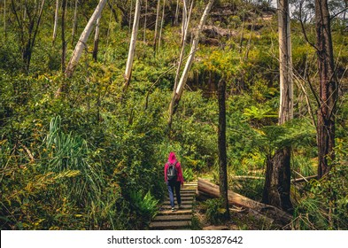 Hiker in Blue Mountains National Park, NSW, Australia