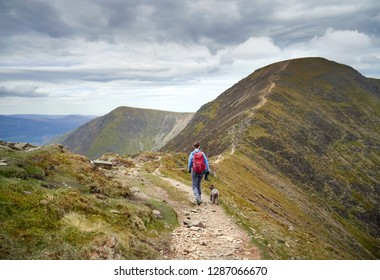 A hiker decending Sail and walking along The Scar towards Crag Hill in the Derwent Fells in the English Lake District.