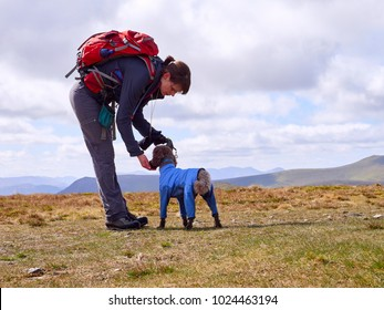 A hiker feeding their dog some biscuits to keep their energy levels up on a long walk in the English Lake District, UK.