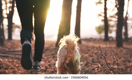 hiker feet walking the dog in the park forest. travel concept. close-up of a leg man walking with journey a dog in the park in the forest. pet dog walk concept. hiker sneakers walking close-up park
