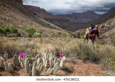 Hiker in the Grand Canyon, Arizona, USA