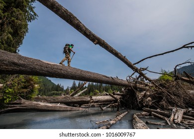 A hiker navigating the river crossings of the Hoh rainforest in Washington state