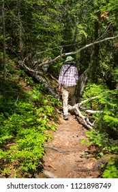 Hiker on a forest trail