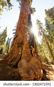 Hiker in Sequoia national park in California, USA
