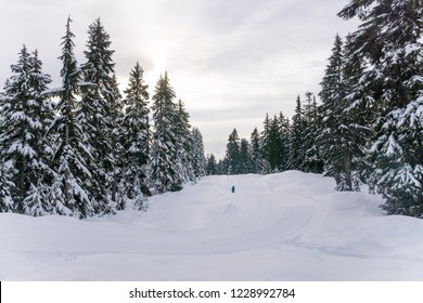 hiker walkin in the winter landscape near vancouver, snowshoeing in the mountains