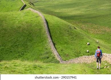 A hiker walking alongside Hadrians Wall Walk in Northumberland, North East of England, UK.