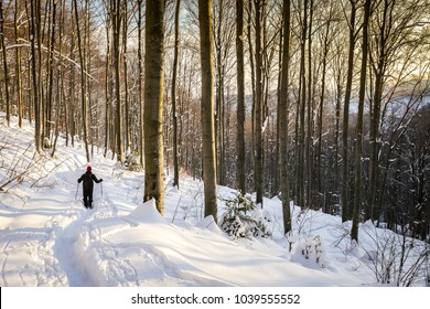 Hiker walking in the forest on the hill covered with fresh deep snow at sunset.