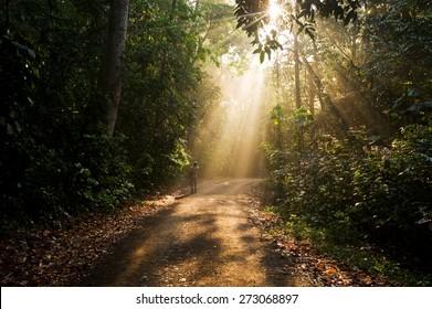 Hiker walking in the jungle