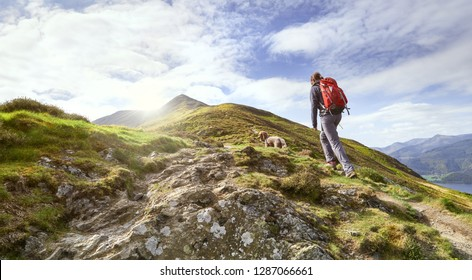 A hiker walking up a mountain ridge, The Edge, towards Ullock Pike, Carl Side and Skiddaw in the English Lake District UK.