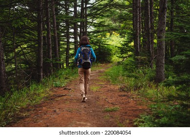 Hiker woman with backpack walking on path in summer forest, rear view