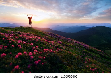 Hiker woman standing with hands up achieving the top. Girl welcomes a sun. Successful woman hiker open arms on sunrise mountain top. Magic pink rhododendron flowers on summer mountains