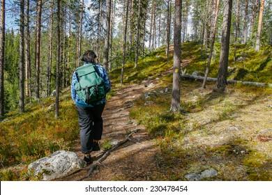 Hiker in woods