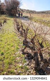 hikers among the vineyard