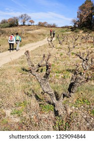hikers among the vineyards