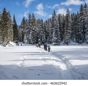 Hikers moving in wintertime pine forest with clearing covered by snow
