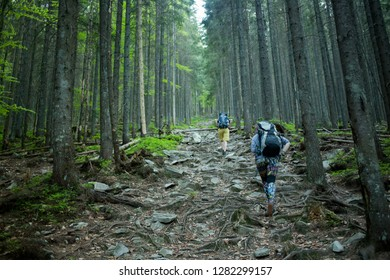 Hikers on a trail in a wood