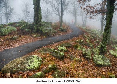 Hikers walk path on misty morning
