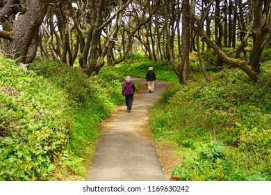 Hikers walk through dense forest and salal undergrowth near Ona beach, Newport, Oregon