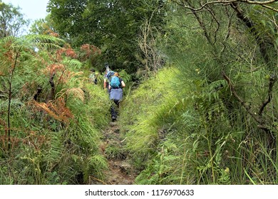 hikers walking along a trail deep in the woods of Etna Park, Sicily