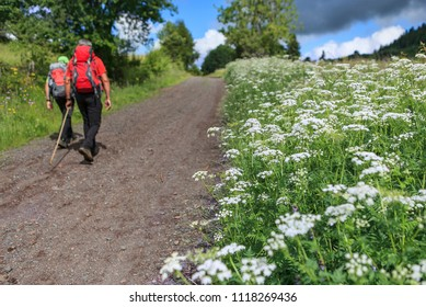 hikers walking in the countryside