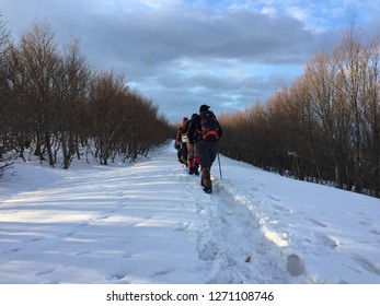 Hikers walking on snowy road surrounded with trees ın January at Yalova, Turkey...