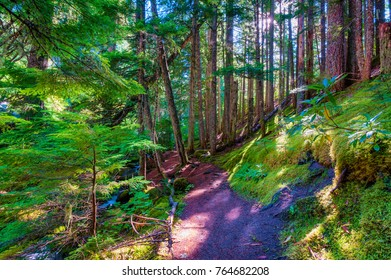Hiking along the Pacific Crest Trail in Mt. Hood National Forest near Ramona Falls and the head of the Sandy River, in Oregon