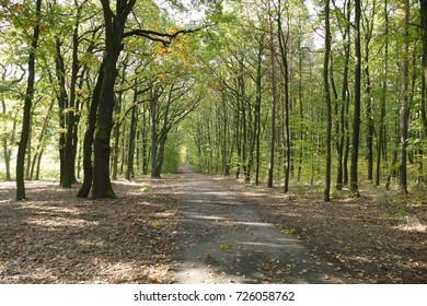 hiking in an autumn forest in a sunny day