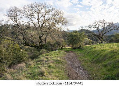 Hiking Back Country Trails in Marin County